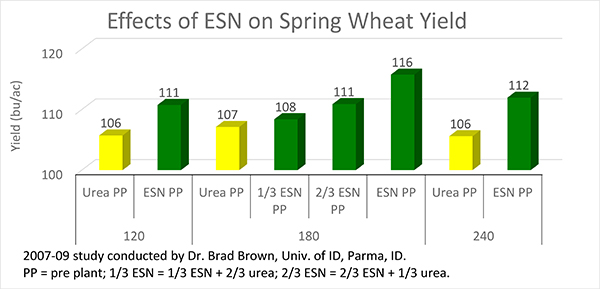 Effects of ESN on Spring Wheat Yield